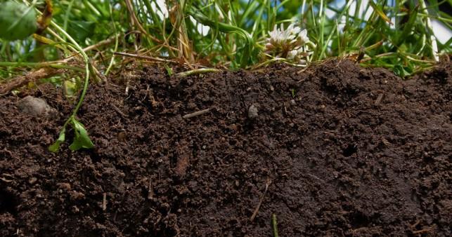 healthy_soil